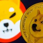 Shiba inu coin price